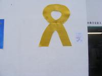 dia contra cancer 024