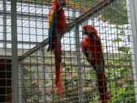 visita-a-la-finca-de-uga-mayo-2014-056