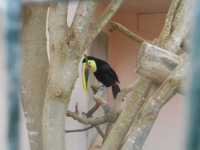 excursion-guinate-tropical-park-2015-009