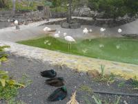 excursion-guinate-tropical-park-2015-042